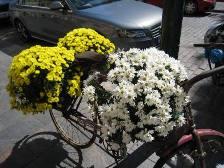 HEL_bikeflower.JPG