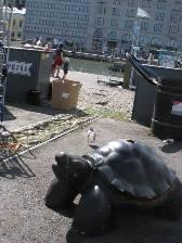 HEL_turtle.JPG
