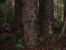 NZ_4sisters1.jpg
