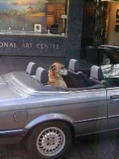 NZ_gooddog.jpg