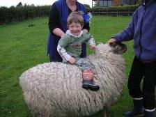 NZ_sheepandfelix.jpg