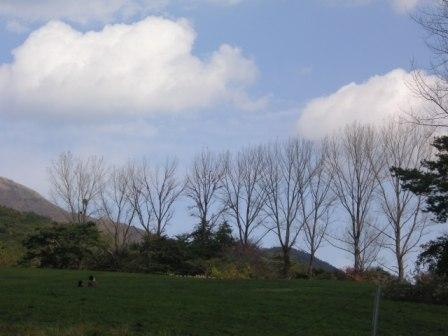 hiruzen_trees.JPG