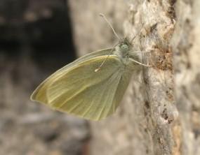 spring_butterfly.JPG
