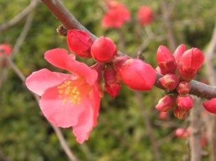 spring_flower2.JPG