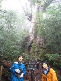 yakushima_daiosugi1.JPG