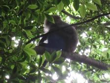 yakushima_monkey.JPG