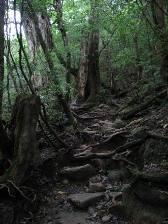 yakushima_ookabuhodo.JPG