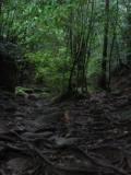 yakushima_tozanpart3.JPG